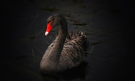 Black Swan Events and Force Majeure Clauses